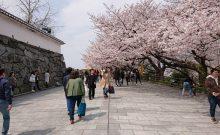 福岡城さくらまつりへ協賛させて頂きました。